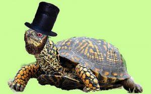 Turtle Speed